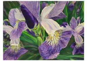 "Craig Andrew's ""Iris Bloom"" watercolor."