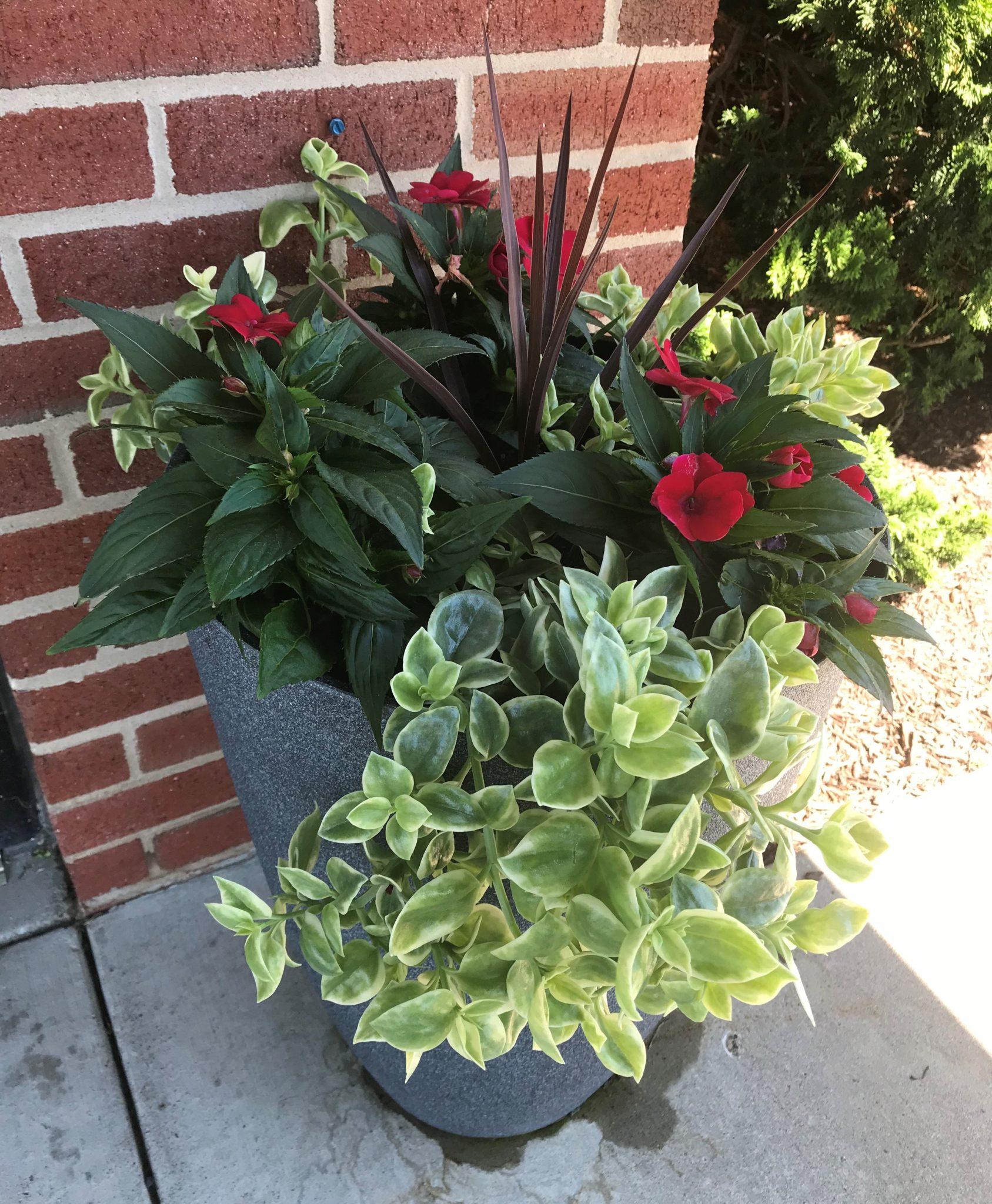 Indoor Gardening for Seniors