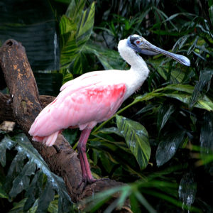 Pink Bird by Jennifer Cavalcante